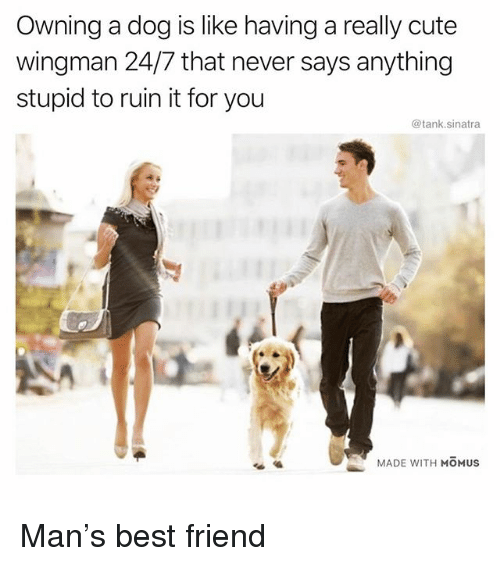 Best Friend, Cute, and Funny: Owning a dog is like having a really cute  wingman 24/7 that never says anything  stupid to ruin it for you  @tank.sinatra  MADE WITH MOMUS Man's best friend