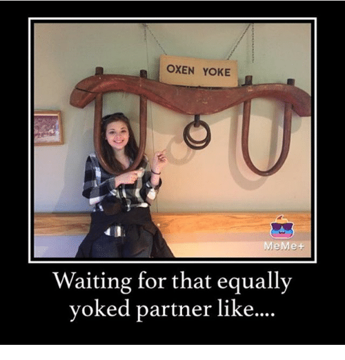Meme, Christian Memes, and Waiting...: OXEN YOKE  MeMe  Waiting for that equally  yoked partner like....