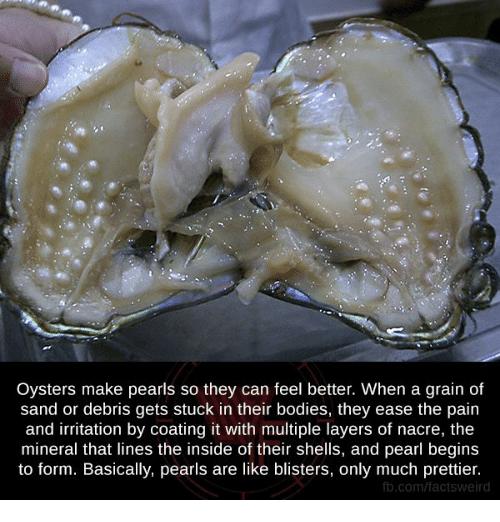 Memes, Layers, And 🤖: Oysters Make Pearls So They Can Feel Better.