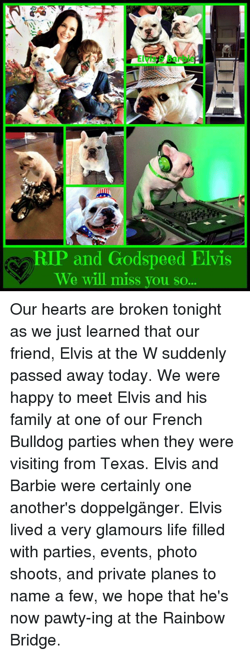 P And Godspeed Elvis We Will Miss You So Our Hearts Are Broken