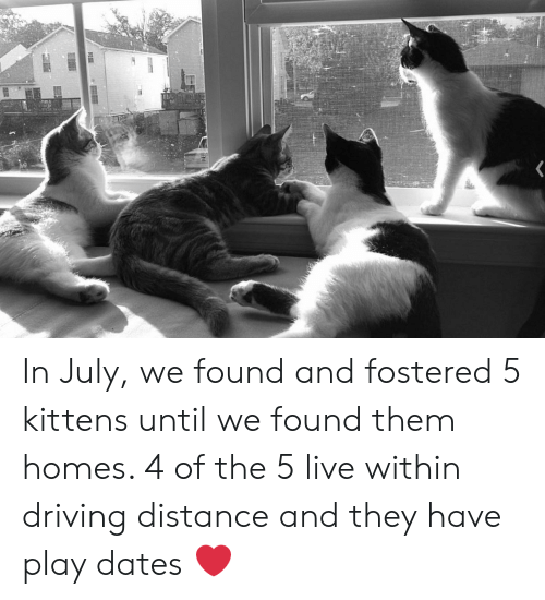 Driving, Kittens, and Live: P In July, we found and fostered 5 kittens until we found them homes. 4 of the 5 live within driving distance and they have play dates ❤