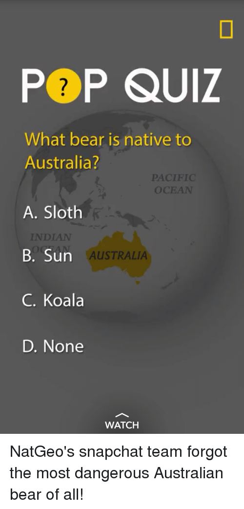 Funny Australia And Bear Pp Quiz What Bear Is Native To Australia