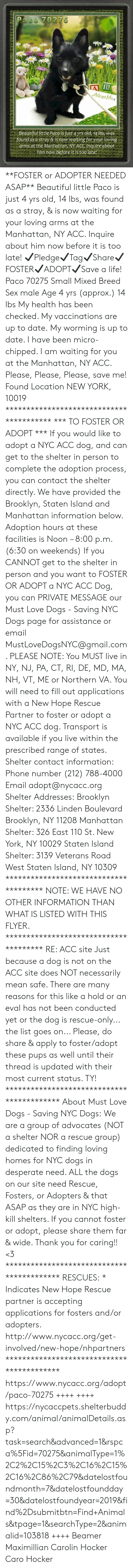 Animals, Beautiful, and Desperate: Paco 70275  B  Adopt Mes  Beautiful little Paco is just 4 yrs old, 14 lbs, was  found as a stray & is now waiting for your loving  arms at the Manhattan, NY ACC. Inquire about.  him now before it is too late! **FOSTER or ADOPTER NEEDED ASAP** Beautiful little Paco is just 4 yrs old, 14 lbs, was found as a stray, & is now waiting for your loving arms at the Manhattan, NY ACC. Inquire about him now before it is too late!  ✔Pledge✔Tag✔Share✔FOSTER✔ADOPT✔Save a life!  Paco 70275 Small Mixed Breed Sex male Age 4 yrs (approx.) 14 lbs  My health has been checked.  My vaccinations are up to date. My worming is up to date.  I have been micro-chipped.   I am waiting for you at the Manhattan, NY ACC.  Please, Please, Please, save me!  Found Location  NEW YORK, 10019  **************************************** *** TO FOSTER OR ADOPT ***   If you would like to adopt a NYC ACC dog, and can get to the shelter in person to complete the adoption process, you can contact the shelter directly. We have provided the Brooklyn, Staten Island and Manhattan information below. Adoption hours at these facilities is Noon – 8:00 p.m. (6:30 on weekends)  If you CANNOT get to the shelter in person and you want to FOSTER OR ADOPT a NYC ACC Dog, you can PRIVATE MESSAGE our Must Love Dogs - Saving NYC Dogs page for assistance or email MustLoveDogsNYC@gmail.com.   PLEASE NOTE: You MUST live in NY, NJ, PA, CT, RI, DE, MD, MA, NH, VT, ME or Northern VA. You will need to fill out applications with a New Hope Rescue Partner to foster or adopt a NYC ACC dog. Transport is available if you live within the prescribed range of states.  Shelter contact information: Phone number (212) 788-4000 Email adopt@nycacc.org  Shelter Addresses: Brooklyn Shelter: 2336 Linden Boulevard Brooklyn, NY 11208 Manhattan Shelter: 326 East 110 St. New York, NY 10029 Staten Island Shelter: 3139 Veterans Road West Staten Island, NY 10309 **************************************  NOTE: WE HAVE NO OTHER INFORMATION THAN WHAT IS LISTED WITH THIS FLYER.  ************************************** RE: ACC site Just because a dog is not on the ACC site does NOT necessarily mean safe. There are many reasons for this like a hold or an eval has not been conducted yet or the dog is rescue-only... the list goes on... Please, do share & apply to foster/adopt these pups as well until their thread is updated with their most current status. TY! ****************************************** About Must Love Dogs - Saving NYC Dogs: We are a group of advocates (NOT a shelter NOR a rescue group) dedicated to finding loving homes for NYC dogs in desperate need. ALL the dogs on our site need Rescue, Fosters, or Adopters & that ASAP as they are in NYC high-kill shelters. If you cannot foster or adopt, please share them far & wide. Thank you for caring!! <3 ****************************************** RESCUES: * Indicates New Hope Rescue partner is accepting applications for fosters and/or adopters. http://www.nycacc.org/get-involved/new-hope/nhpartners ****************************************** https://www.nycacc.org/adopt/paco-70275 ++++ ++++ https://nycaccpets.shelterbuddy.com/animal/animalDetails.asp?task=search&advanced=1&rspca%5Fid=70275&animalType=1%2C2%2C15%2C3%2C16%2C15%2C16%2C86%2C79&datelostfoundmonth=7&datelostfoundday=30&datelostfoundyear=2019&find%2Dsubmitbtn=Find+Animals&tpage=1&searchType=2&animalid=103818 ++++ Beamer Maximillian Carolin Hocker Caro Hocker