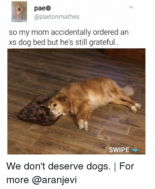 Dogs, Memes, and Mom: paese  paetonmathes  so my mom accidentally ordered an  xs dog bed but he's still grateful  SWIPE We don't deserve dogs. | For more @aranjevi
