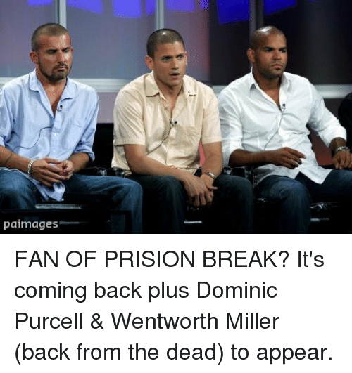 paimages fan of prision break its coming back plus dominic 11006200 paimages fan of prision break? it's coming back plus dominic purcell