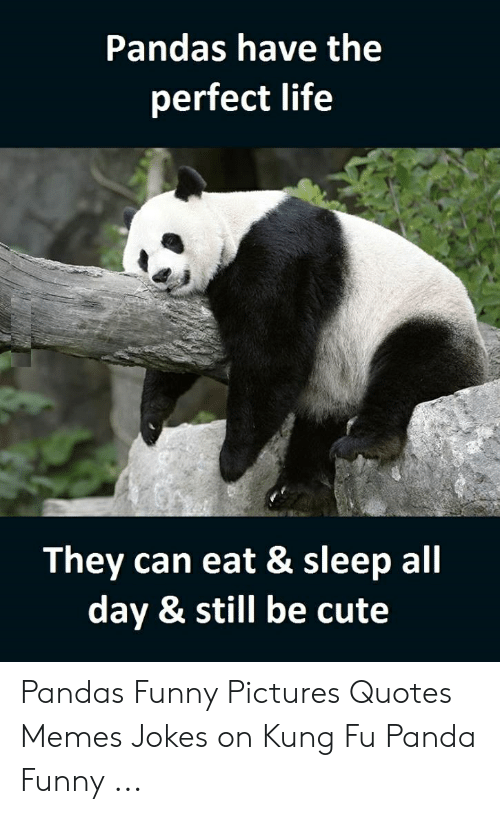 Pandas Have The Perfect Life They Can Eat Sleep All Day Still