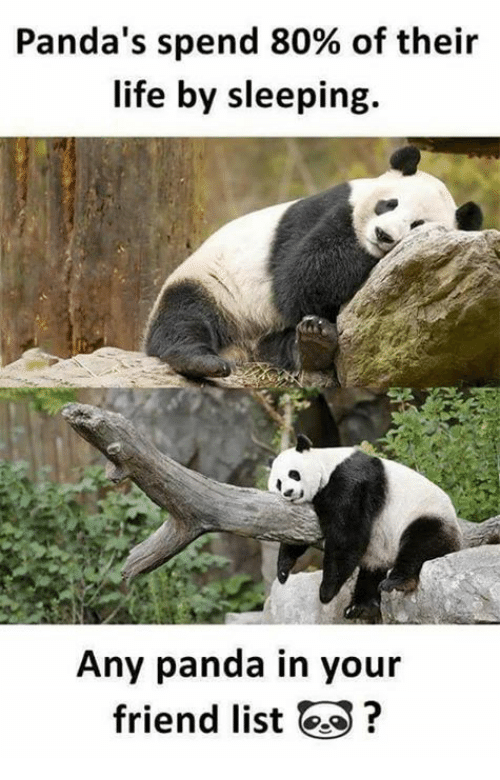 Pandas spend 80 of their life by sleeping any panda in your friend funny life and panda pandas spend 80 of their life by sleeping voltagebd Choice Image