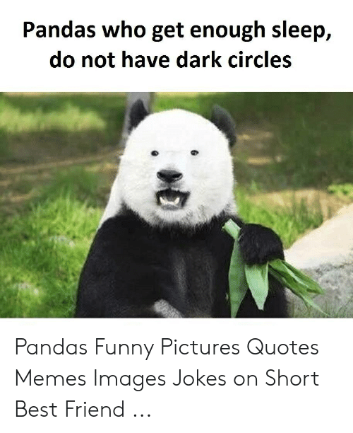 Pandas Who Get Enough Sleep Do Not Have Dark Circles Pandas Funny