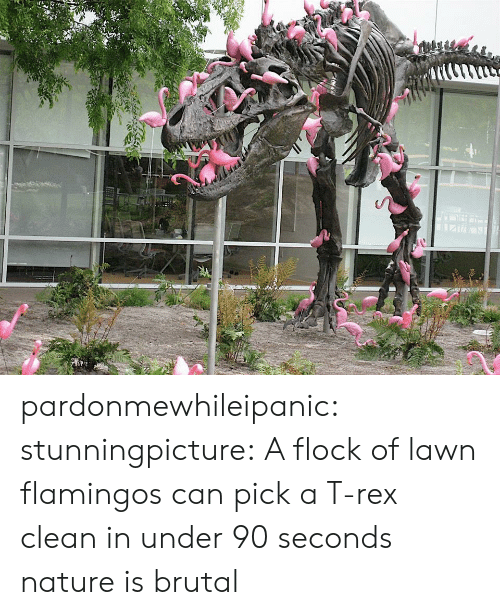 Tumblr, Blog, and Http: pardonmewhileipanic: stunningpicture:  A flock of lawn flamingos can pick a T-rex clean in under 90 seconds  nature is brutal