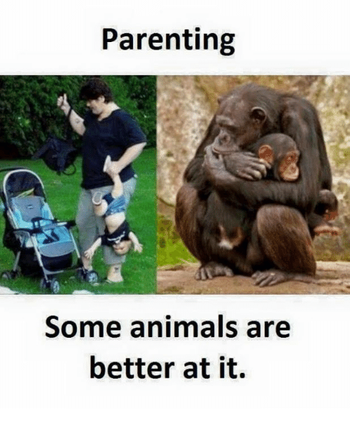 Better: Parenting  Some animals are  better at it.
