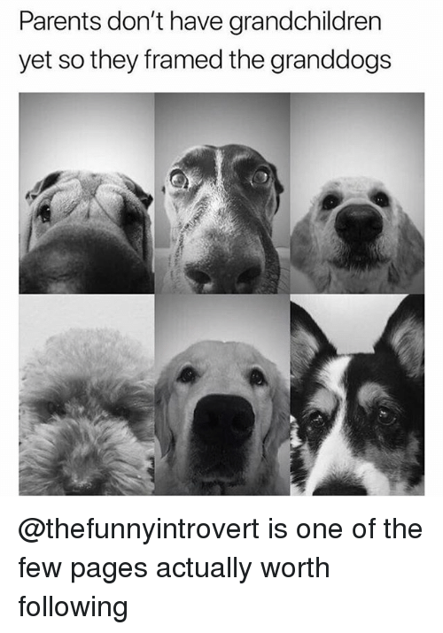 Funny, Parents, and Pages: Parents don't have grandchildren  yet so they framed the granddogs @thefunnyintrovert is one of the few pages actually worth following