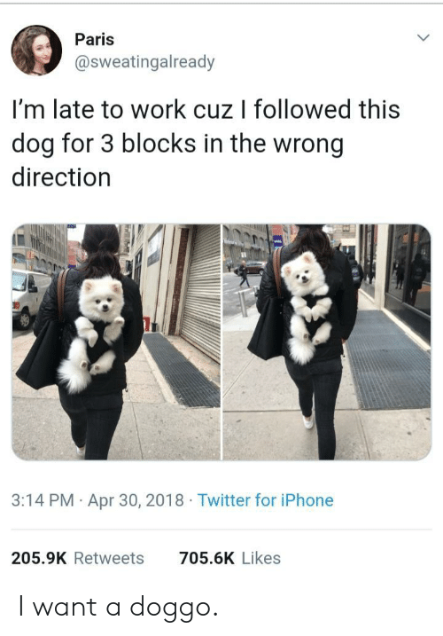 Iphone, Twitter, and Work: Paris  @sweatingalready  I'm late to work cuz I followed this  dog for 3 blocks in the wrong  direction  3:14 PM Apr 30, 2018 Twitter for iPhone  205.9K Retweets  705.6K Likes I want a doggo.