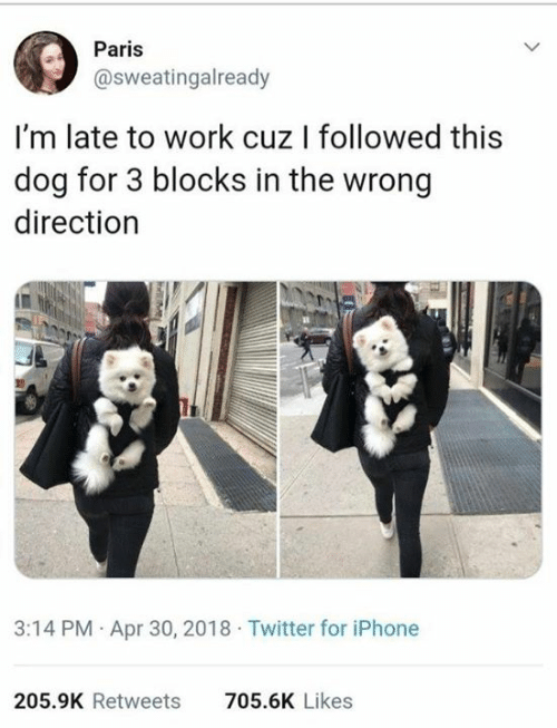 Dank, Iphone, and Twitter: Paris  @sweatingalready  I'm late to work cuz I followed this  dog for 3 blocks in the wrong  direction  3:14 PM Apr 30, 2018 Twitter for iPhone  205.9K Retweets  705.6K Likes
