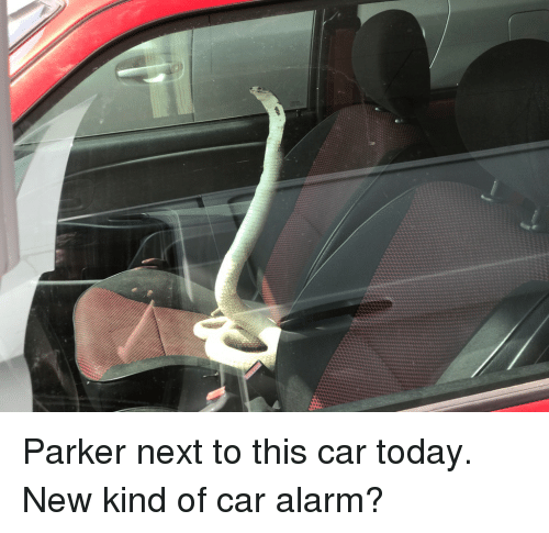 Funny Alarm And Today Parker Next To This Car New Kind