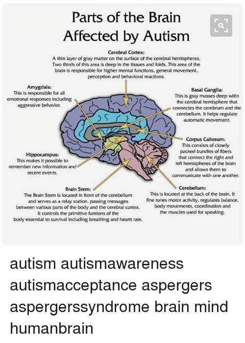 Parts of the brain affected by autism cerebral cortex a thin layer memes autism and brain parts of the brain affected by autism cerebral cortex ccuart Images