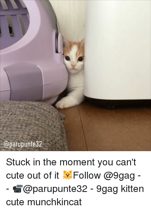 9gag, Cute, and Memes: @parupunte32 Stuck in the moment you can't cute out of it 🐱Follow @9gag - - 📹@parupunte32 - 9gag kitten cute munchkincat