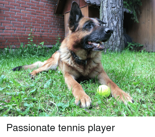 Tennis, Passionate, and Player