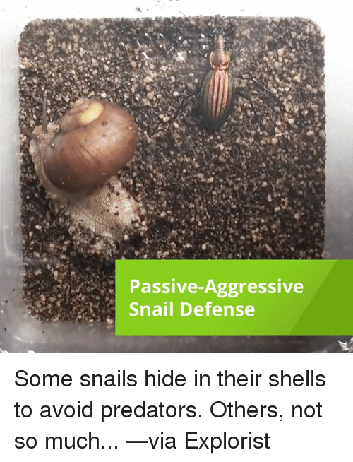 Memes, Passive Aggressive, and Predator: Passive Aggressive  Snail Defense Some snails hide in their shells to avoid predators.  Others, not so much... —via Explorist
