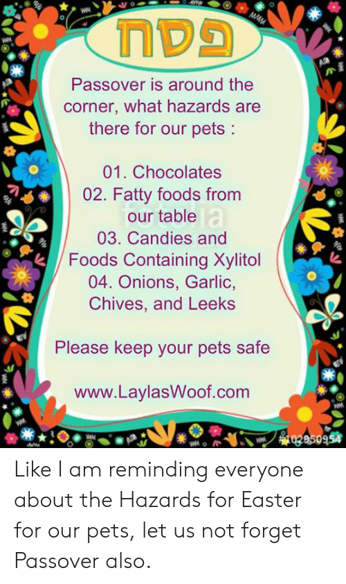 Easter, Memes, and Pets: Passover is around the  corner, what hazards are  there for our pets:  01. Chocolates  02. Fatty foods from  our table  03. Candies and  FoodsContming Xyitol  04. Onions, Garlic,  Chives, and Leeks  Please keep your pets safe  www.LaylasWoof.com  954 Like I am reminding everyone about the Hazards for Easter for our pets, let us not forget Passover also.