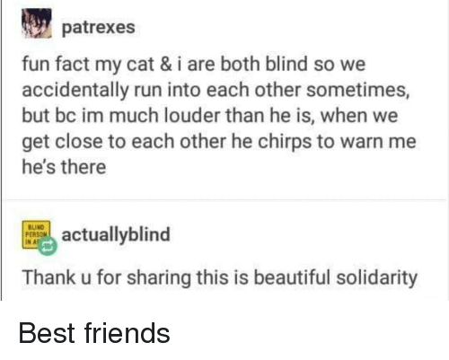 Beautiful, Friends, and Run: patrexes  fun fact my cat & i are both blind so we  accidentally run into each other sometimes,  but bc im much louder than he is, when we  get close to each other he chirps to warn me  he's there  tuallyblind  INAF  Thank u for sharing this is beautiful solidarity Best friends