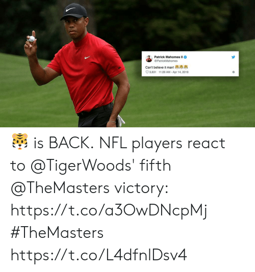 Memes, Nfl, and Back: Patrick Mahomes ll  @PatrickMahomes  can't believe it man!  3,831 1:29 AM Apr 14, 2019 🐯 is BACK.  NFL players react to @TigerWoods' fifth @TheMasters victory: https://t.co/a3OwDNcpMj #TheMasters https://t.co/L4dfnlDsv4