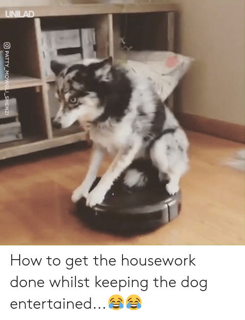 Dank, Housework, and How To: PATTY-MG  I-SHENZI How to get the housework done whilst keeping the dog entertained...😂😂