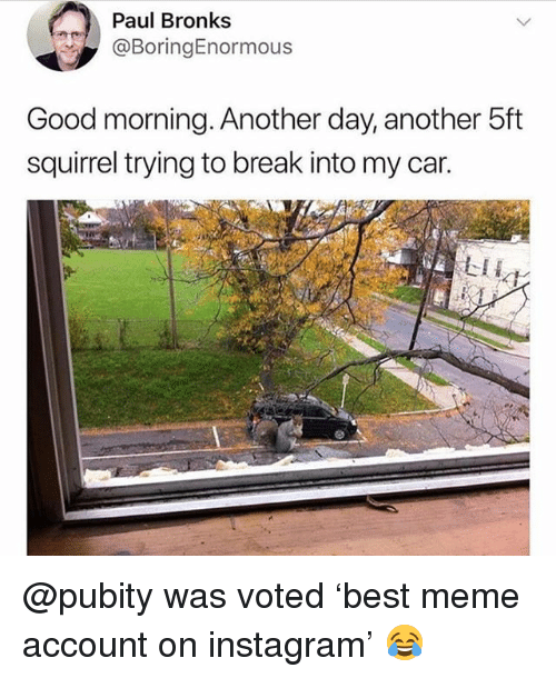 Funny, Instagram, and Meme: Paul Bronks  @BoringEnormous  Good morning. Another day, another 5ft  squirrel trying to break into my car.  LII @pubity was voted 'best meme account on instagram' 😂