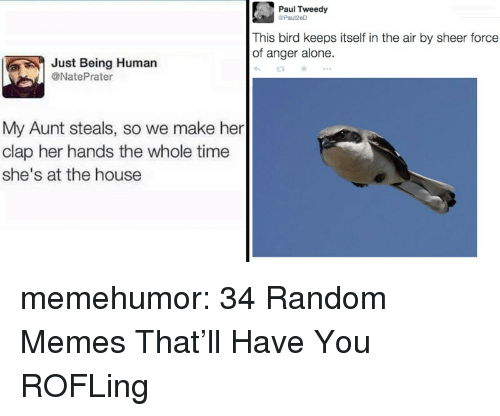 Being Alone, Memes, and Tumblr: Paul Tweedy  Paul2eD  This bird keeps itself in the air by sheer force  of anger alone  Just Being Human  @NatePrater  My Aunt steals, so we make her  clap her hands the whole time  she's at the house memehumor:  34 Random Memes That'll Have You ROFLing