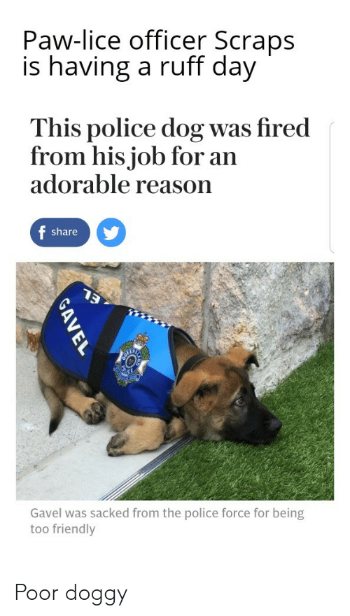 Police, Lice, and Reason: Paw-lice officer Scraps  is having a ruff day  This police dog was fired  from his job for an  adorable reason  share  Gavel was sacked from the police force for being  too friendly Poor doggy