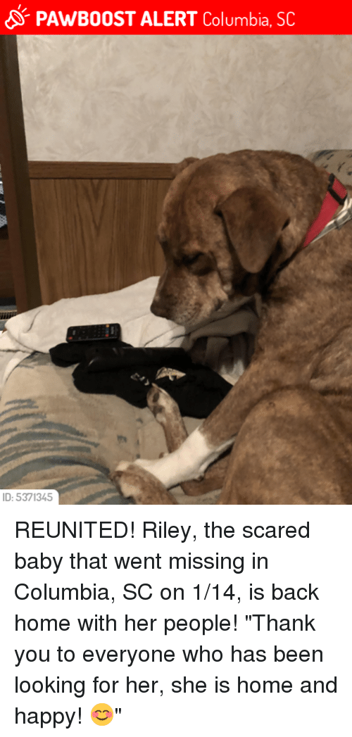 Pawb0ost Alert Columbia Sc Id 5371345 Reunited Riley The Scared