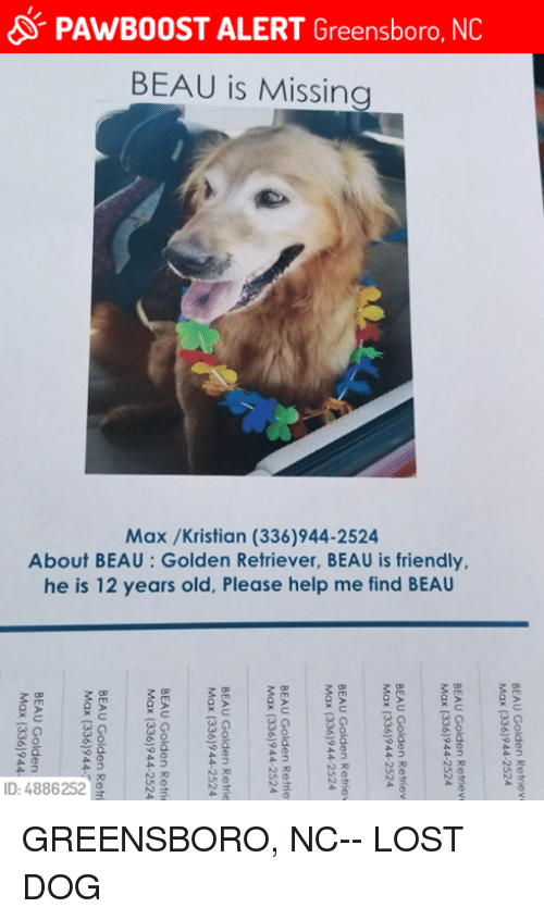 Memes, Lost, and Golden Retriever: PAWBOOST ALERT Greensboro, NC  BEAU is Missing  Max /Kristian (336)944-2524  About BEAU: Golden Retriever, BEAU is friendly.  he is 12 years old, Please help me find BEAU  D: 4886252 GREENSBORO, NC-- LOST DOG