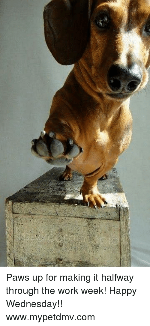 Paws Up for Making It Halfway Through the Work Week! Happy ...