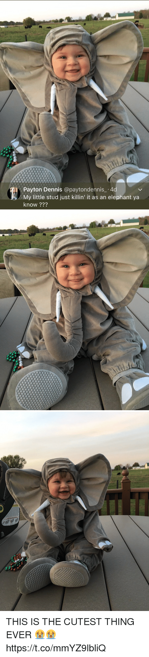 Elephant, Relatable, and My Little: Payton Dennis @paytondennis_ -4d  My little stud just killin' it as an elephant ya  know ??? THIS IS THE CUTEST THING EVER 😭😭 https://t.co/mmYZ9lbliQ