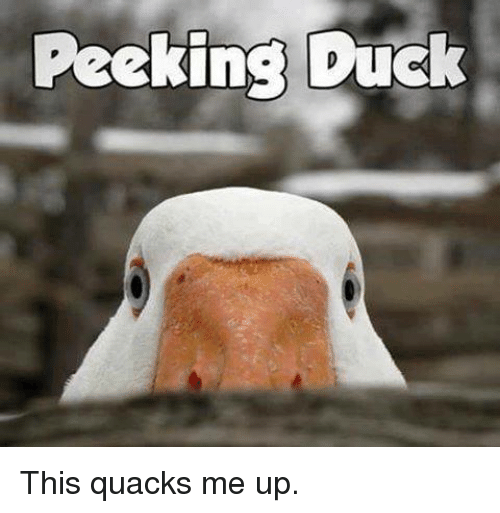 Memes, Duck, and 🤖: Peeking Duck This quacks me up.