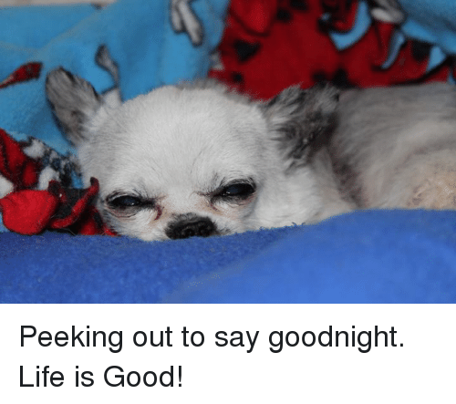 Life, Memes, and Good: Peeking out to say goodnight. Life is Good!