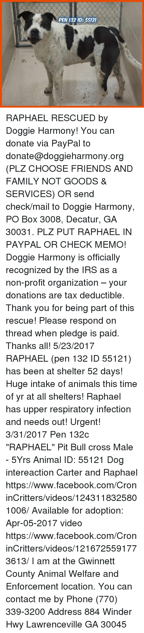 PEN 132 ID 55121 RAPHAEL RESCUED by Doggie Harmony! You Can Donate