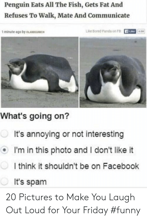 Bored, Facebook, and Friday: Penguin Eats All The Fish, Gets Fat And  Refuses To Walk, Mate And Communicate  1 minute ago by OLANDOICH  Lhe Bored parda on FB  What's going on?  It's annoying or not interesting  I'm in this photo and I don't like it  I think it shouldn't be on Facebook  It's spam 20 Pictures to Make You Laugh Out Loud for Your Friday #funny