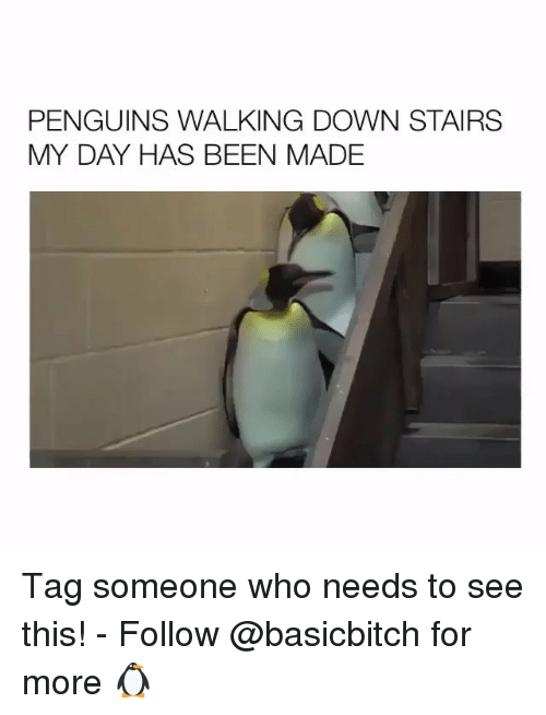Penguins, Tag Someone, and Girl Memes: PENGUINS WALKING DOWN STAIRS  MY DAY HAS BEEN MADE Tag someone who needs to see this! - Follow @basicbitch for more 🐧