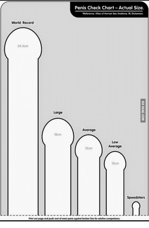 What is the average size erect penis