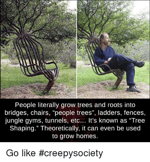 Memes, Tree, And Trees: People Literally Grow Trees And Roots Into Bridges,