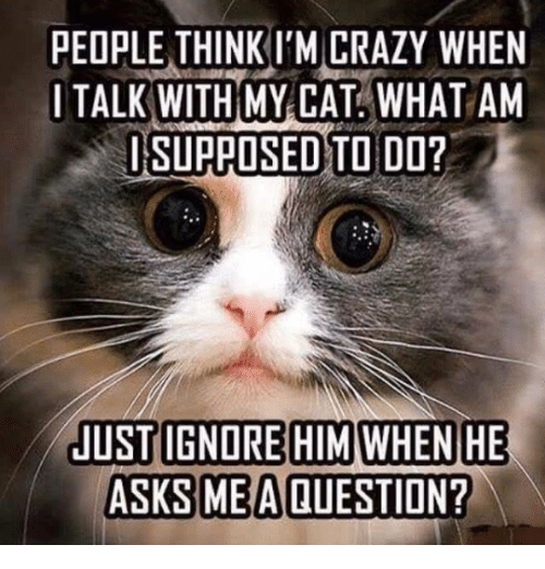 Ignorant, Memes, and Ignorance: PEOPLE THINKI'M CRAZY WHEN  I TALK WITH MY CAT WHAT AM  SI SUPPOSED TO DO?  JUST IGNORE HIM WHEN HE  ASKS ME A QUESTION?