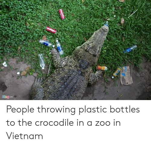 Vietnam, Zoo, and Plastic: People throwing plastic bottles to the crocodile in a zoo in Vietnam