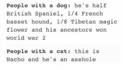 Grumpy Cat, British, and World War 2: People with a dog: he's half  British Spaniel  1/4 French  basset hound, 1/8 Tibetan magic  flower and his ancestors won  world war 2  People with a cat  this is  Nacho and he's an asshole