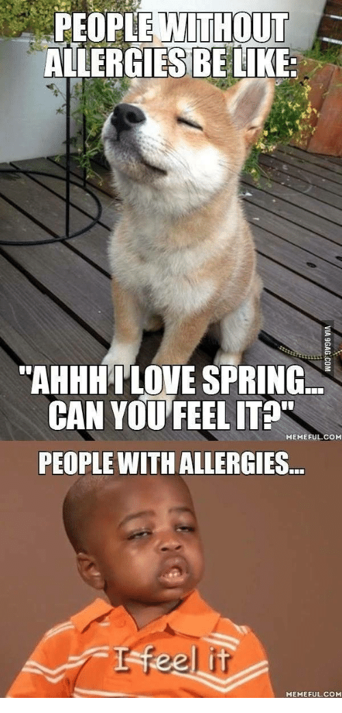people without allergies be like ahhhai love spring can you 17927629 ✅ 25 best memes about spring allergies meme spring allergies memes