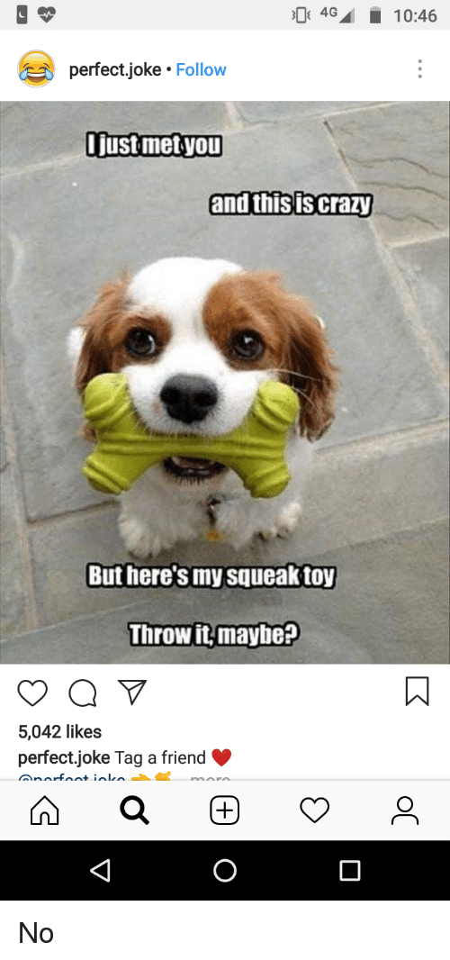 Crazy, Friend, and You: perfect,joke Follow  Ijust met you  and this is crazy  But here's my squeak toy  Throw it maybe?  5,042 likes  perfect.joke Tag a friend