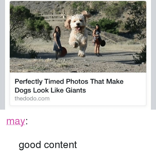"Dogs, Target, and Tumblr: Perfectly Timed Photos That Make  Dogs Look Like Giants  thedodo.com <p><a href=""http://may.tumblr.com/post/124344807763/good-content"" class=""tumblr_blog"" target=""_blank"">may</a>:</p>  <blockquote><p>good content</p></blockquote>"
