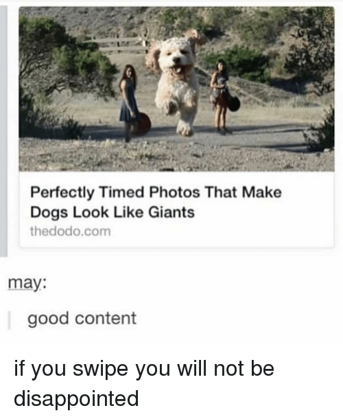 Disappointed, Dogs, and Memes: Perfectly Timed Photos That Make  Dogs Look Like Giants  thedodo.com  may:  good content if you swipe you will not be disappointed