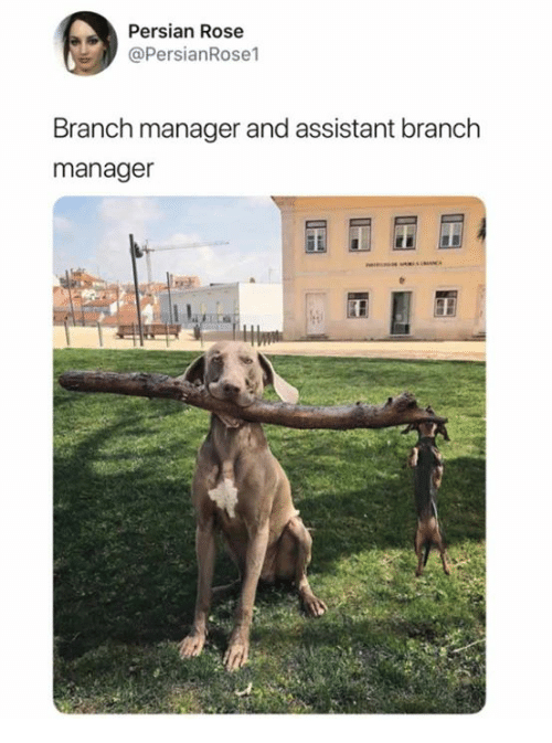 Dank, Rose, and Persian: Persian Rose  @PersianRose1  Branch manager and assistant branch  manager