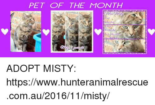 Home Market Barrel Room Trophy Room ◀ Share Related ▶ memes 🤖 com pet misty months www month petting The Adopted Punch Up next collect meme → Embed it next → PET OF THE MONTH ADOPT MISTY httpswwwhunteranimalrescuecomau201611misty Meme memes 🤖 com pet misty months www month petting The Adopted memes memes 🤖 🤖 com com pet pet misty misty months months www www month month petting petting The The Adopted Adopted found @ 12 likes ON 2017-05-26 11:37:30 BY me.me source: facebook view more on me.me