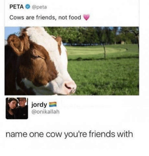 PETA a Peta Cows Are Friends Not Food Jordy Name One Cow You're